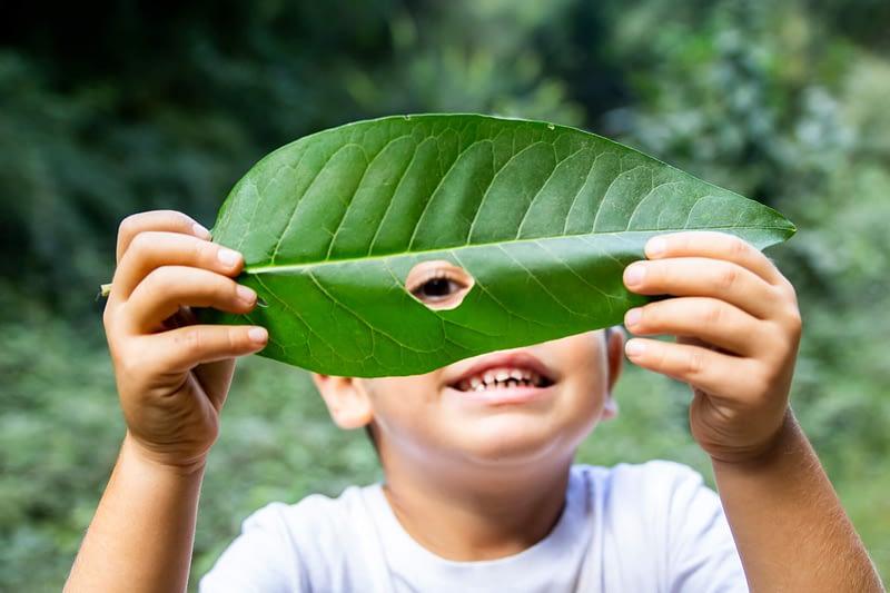 jongen gluurt door blad van plant